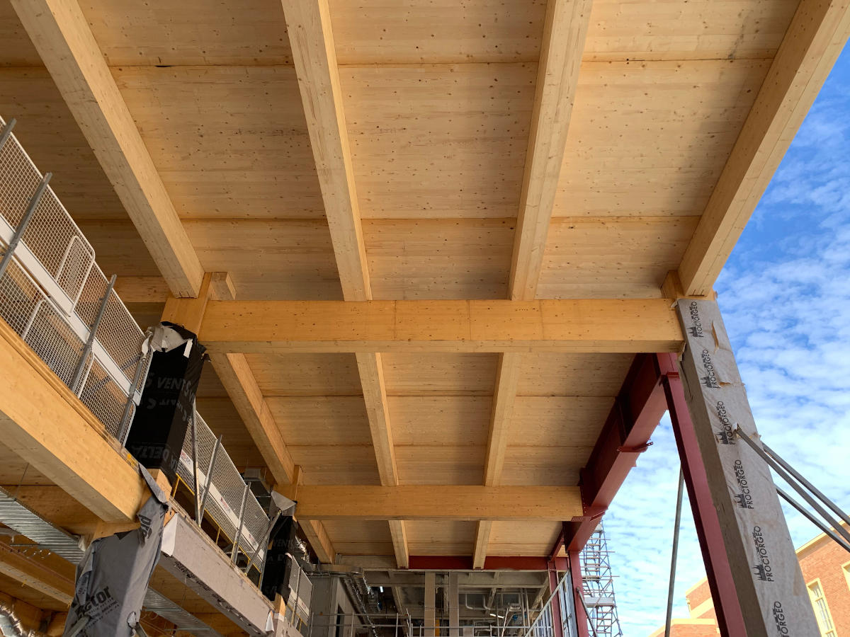 View from underneath engineered timber floor structure during construction of Ballarat Govhub